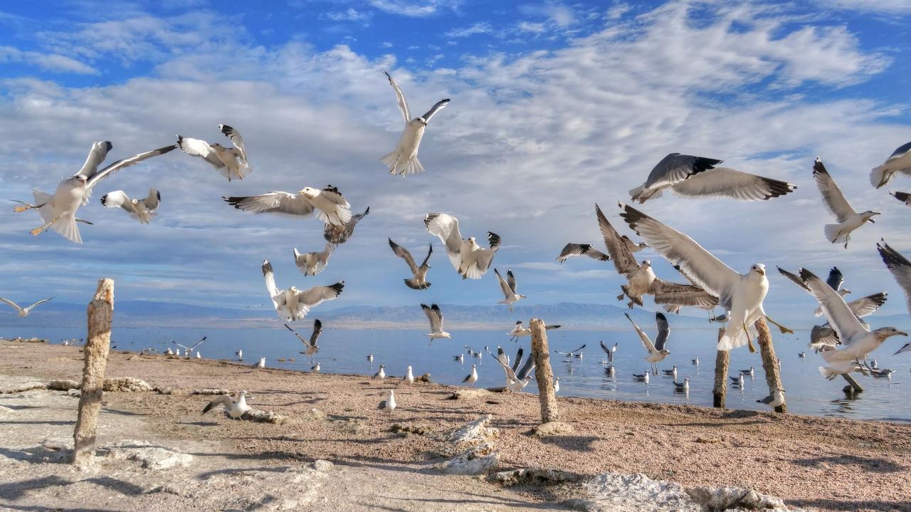 Desert Shores 5 Post Gulls