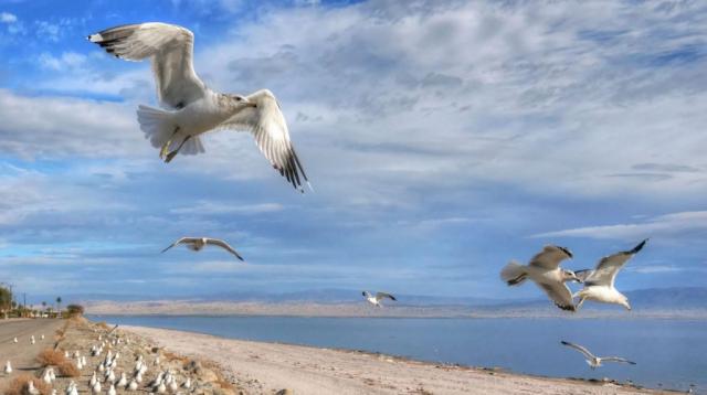 Desert Shores gulls, left corner road