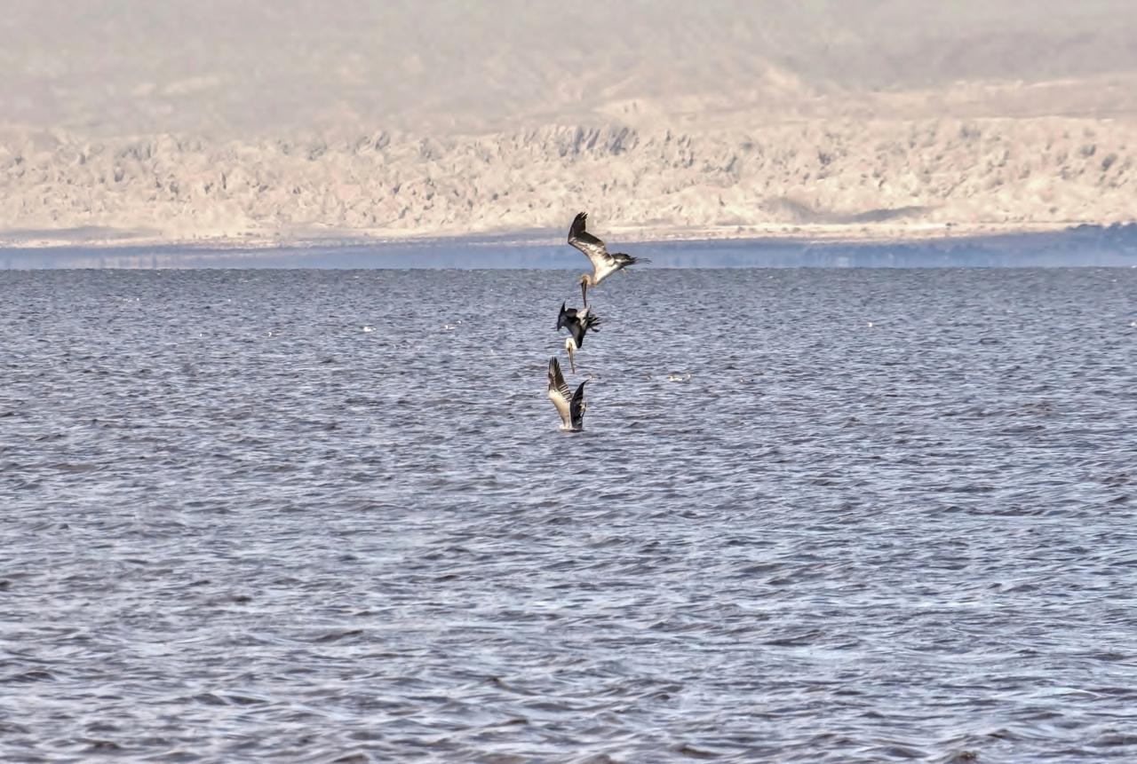 3 Divers Salton Sea Beach