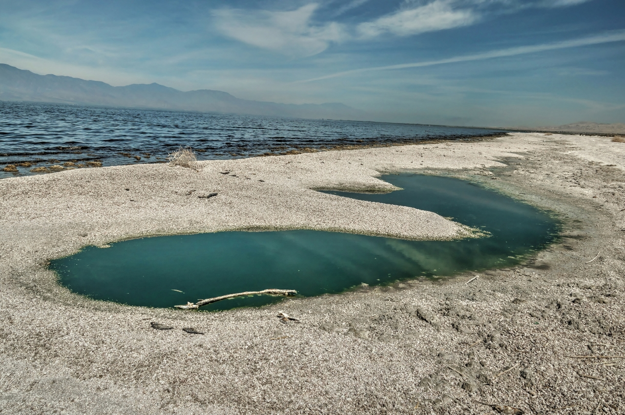 Salton Sea Whale near Salt Creek